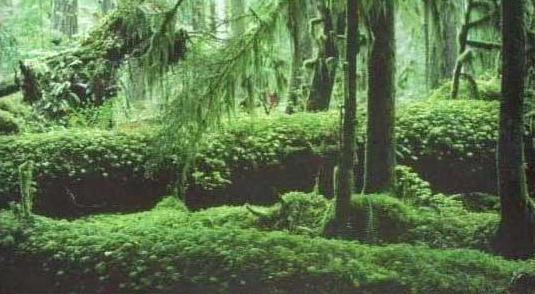 carta astral selva tropical