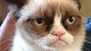 Grumpy Cat es Capricornio.
