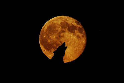 Luna Llena en Leo 2019, Eclipse Lunar y Superluna de Sangre